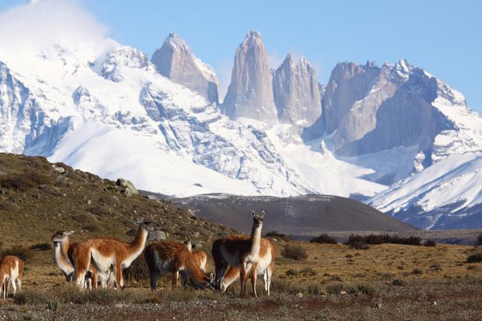 Fabrika de Case - Diversitatea faunei, un alt punct forte al acestor tinuturi
