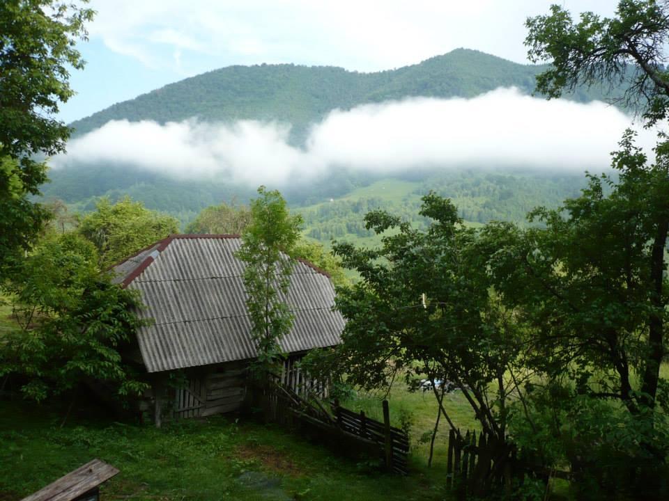 Fabrika de Case - Casa cu brad, ceata dupa ploaie