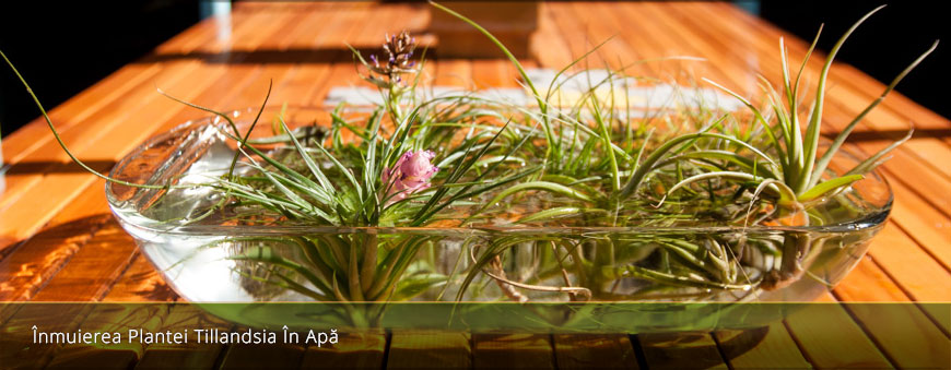 Fabrika de Case - Fly Garden plante aeriene