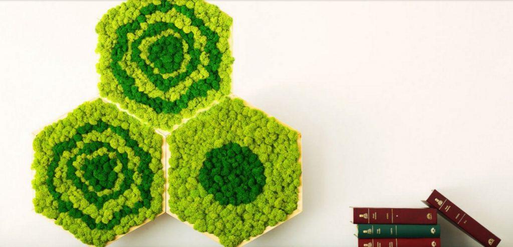 Fabrika de Case - Verde pe Perete